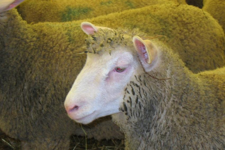 La p rennit des exploitations assur e gr ce l levage ovin la chambre d agriculture de l - Chambre d agriculture de la nievre ...