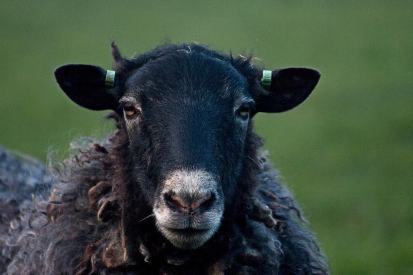 Rejeter des thérapies au pouvoir salvateur est-il encore raisonnable ? Le milieu sanitaire face à ses moutons noirs…