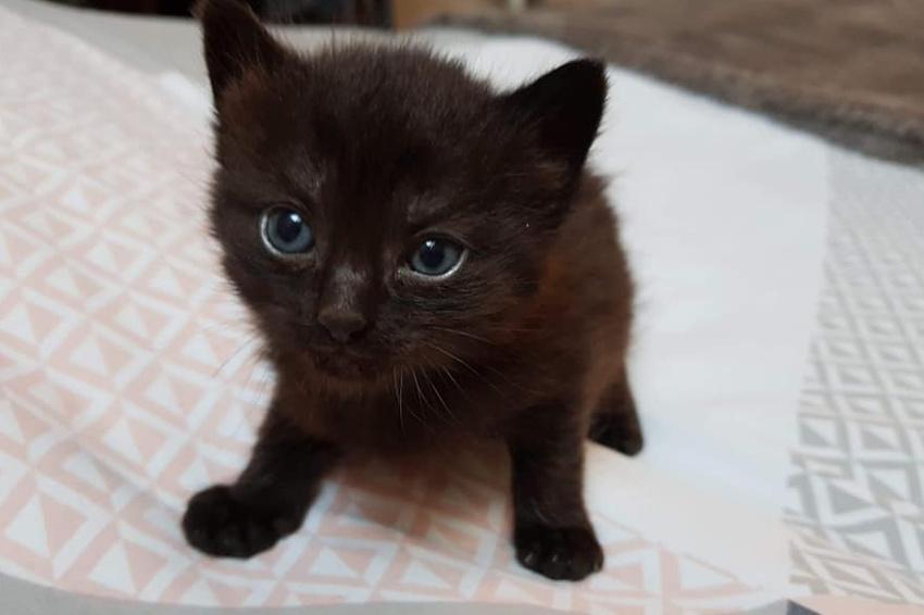 Générosité : même les chatons ont besoin de dons et de procédures d'adoption !