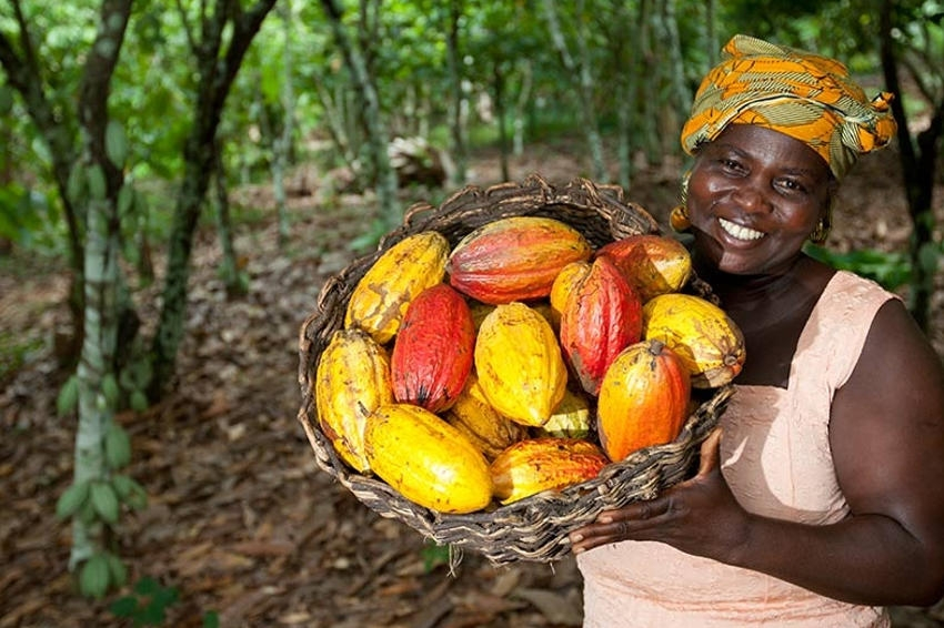 Lune d'Afrique peaufine son futur évènement : le CHOCO VINS Festival un lien subtil entre l'Yonne et la Côte d'Ivoire ?