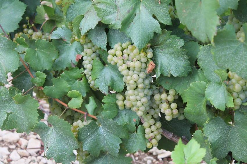 Un concours de photo valorisera les acteurs de la filière viticole : le nouvel objectif du Crédit agricole régional…