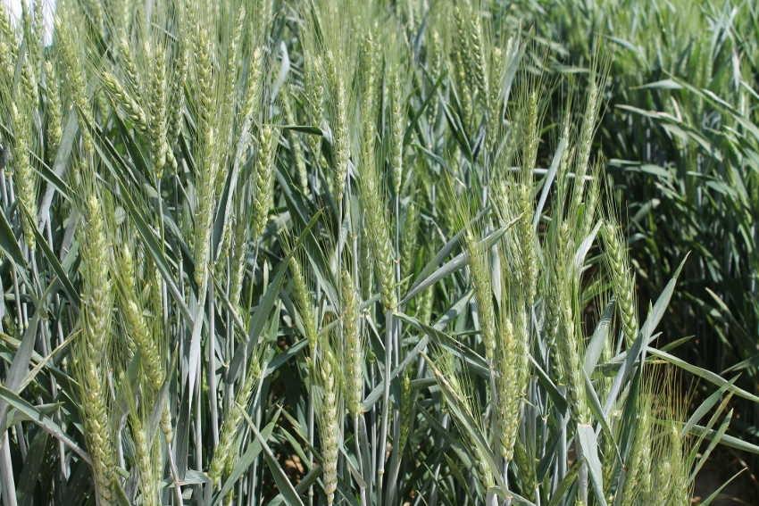 Les bienfaits de l'agroécologie se dévoilent grâce à des portes ouvertes initiées en Bourgogne Franche-Comté