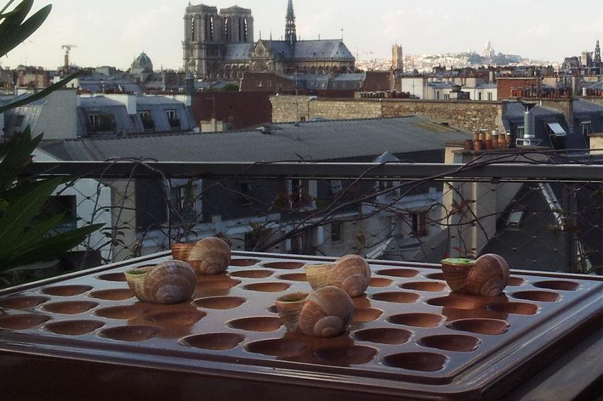 CROQUE BOURGOGNE confirme sa présence au Salon des Coqs d'Or, un tremplin pour imposer ses escargots à Paris…